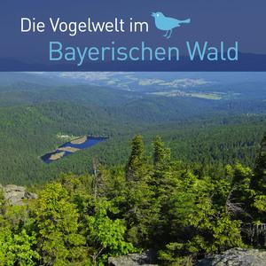 Die Vogelwelt im Bayerischen Wald