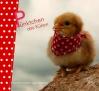 Vergrößerte Darstellung Cover: Pünktchen das Küken. Externe Website (neues Fenster)
