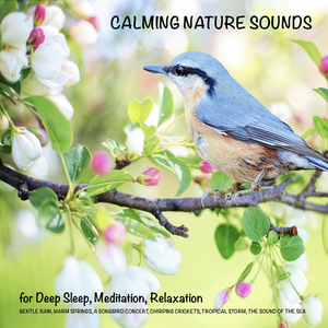 Calming Nature Sounds (without music) for Deep Sleep, Meditation, Relaxation