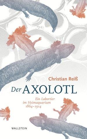 Der Axolotl