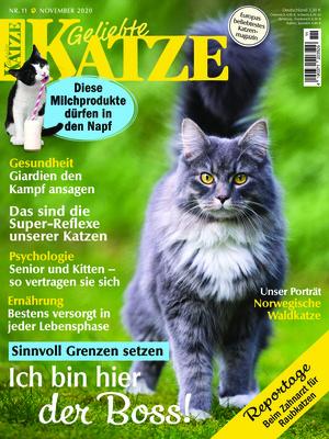 Geliebte Katze (11/2020)