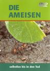 Die Ameisen