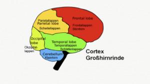 Schlaue Zellen - Neurowissenschaften