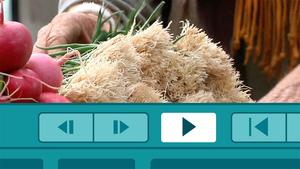 Final Cut Pro X v10.0.9: Documentary Editing