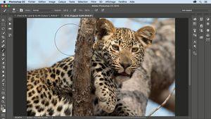 Photoshop CC : Astuces et techniques