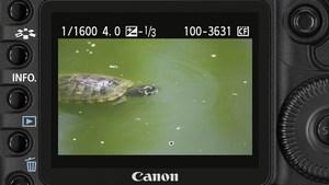 Canon EOS 5D Mark II - Das dynamische Display