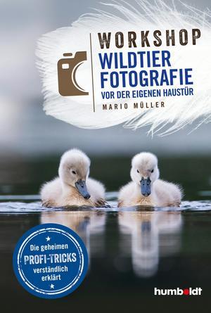 Workshop Wildtierfotografie vor der eigenen Haustür