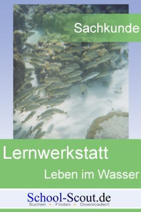 Lernwerkstatt: Leben im Wasser: Quallen