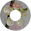 Die Blüte der Pflaume (Mirabelle) - Lehrerversion