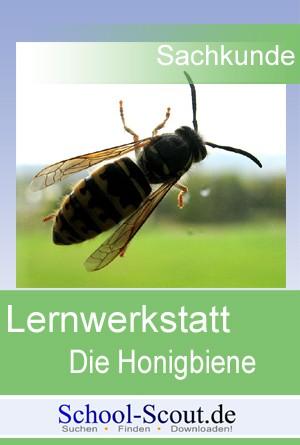 Lernwerkstatt: Die Honigbiene