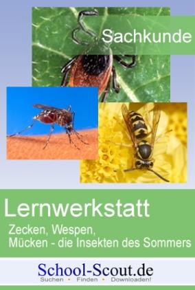 Lernwerkstatt Insekten: Die Wespe