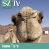 Teure Tiere