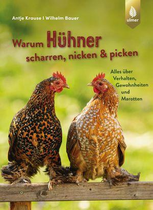 Warum Hühner scharren, nicken und picken